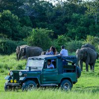 Jeep Safari in Minneriya National Park ($50/pax)