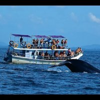 Whale Watching ($50/pax)