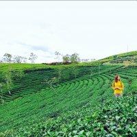 Dalat Tea, Wine, Coffee Tasting Tour