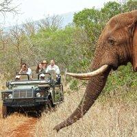 Sri-Lanka 4 day tour - Anuradhapura, Sigiriya, Safari, Kandy