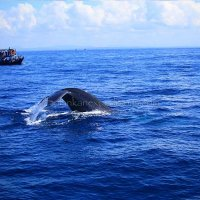 Whales watching, South tour, Colombo (2 days)