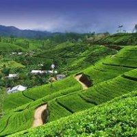 4 days Sigiriya, Safari, Kandy, Nuwara Eliya tour